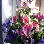 Nyári virágaim